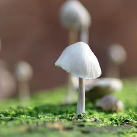 by Jacqueline Van den Berg - Nature Up Close Mushrooms & Fungi