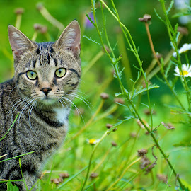 In the Garden by Catherine Trudeau - Animals - Cats Portraits