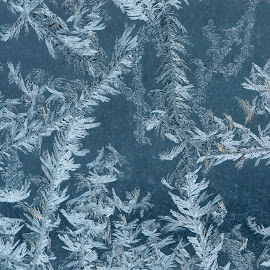 Frosted Window by Chandra Whitfield - Abstract Macro ( macro, winter, pattern, cold, ice, frost )