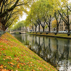Düsseldorf by Daniel Chobanov - City,  Street & Park  Street Scenes ( düsseldorf, autumn, germany, gold, leaves )