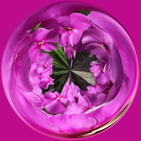 Pretty in Pink by Colleen Legree - Abstract Fine Art ( abstract, circular, fine art, pink, flowers, pretty )