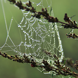 Spider Web by Eugenija Seinauskiene - Nature Up Close Webs ( nature, grass, autumn, web, net )
