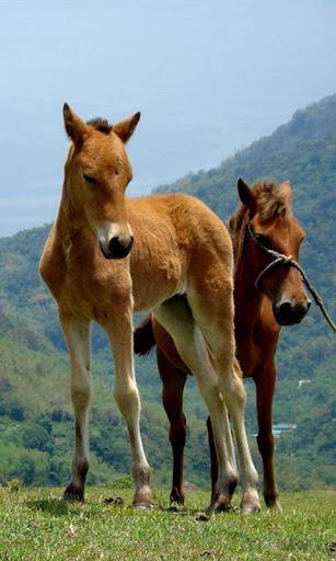 馬:家族のためのパズル