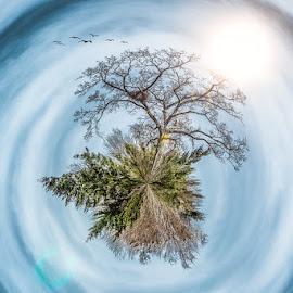 Planet Tree by Stefan Tiesing - Digital Art Places