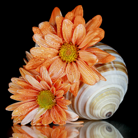 by Dipali S - Artistic Objects Still Life ( water, shells, reflection, still life, drops, artistic, object, flower )