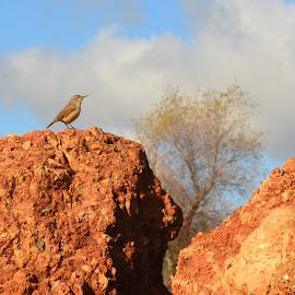 Bird and Granite by Brian Blood - Nature Up Close Rock & Stone ( bird, rock, landscape, granite,  )
