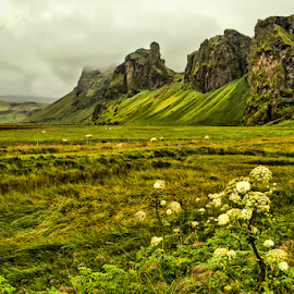 Green Iceland by Roxie Crouch - Landscapes Prairies, Meadows & Fields ( angelica, mountains, pasture, iceland, green, marsh, fields, , renewal, trees, forests, nature, natural, scenic, relaxing, meditation, the mood factory, mood, emotions, jade, revive, inspirational, earthly )