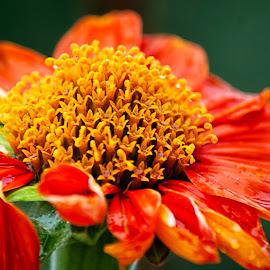 Interest what it's called? by Hartono Wijaya  - Novices Only Flowers & Plants ( toraja, indonesia, flower,  )