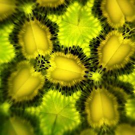 Kiwidoscope by Carlos Reyes - Abstract Patterns