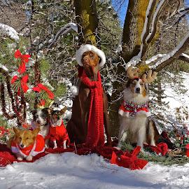 Merry Christmas by Marilyn Bernstein - Animals - Dogs Portraits ( dogs, dogs christmas, christmas, dog portrait, dog, merry christmas )