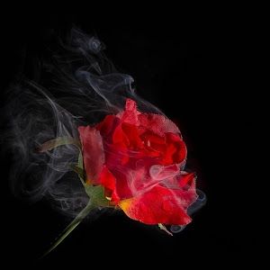 rose 1-50-2.jpg