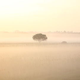 Mist Mist and Mist by Sesha Giri - Landscapes Weather (  )