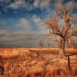 Old Cotton Wood in winter by Danny Pack - Landscapes Prairies, Meadows & Fields ( clouds, cottonwood, sky, winter, tree, prairie, golden hour )