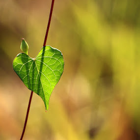 Love U by Irfan Hikmawan - Nature Up Close Leaves & Grasses ( macro, nature )