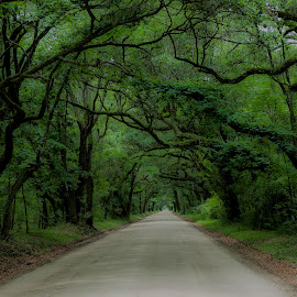 Enchanted Forest by Eric Peterson - Landscapes Travel ( mystical, green, road, tree canopy, live oaks, spanish moss,  )