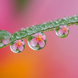 Underground  by Citra Hernadi - Nature Up Close Natural Waterdrops
