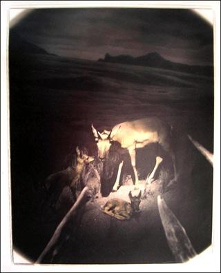 deer_photo02