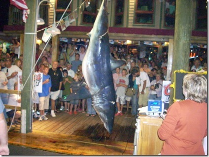 http://lh6.ggpht.com/fisherwy/RxNMUC2KppI/AAAAAAAAKII/QC2kbB0dPVI/844-pound+Mako+Shark+Hauled+by+Angler+Adlee+Bruner+at+Destin+Fishing+Rodeo%5B2%5D.jpg
