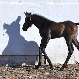 shadow dancer by Terry Niec - Animals Horses ( baby animals )