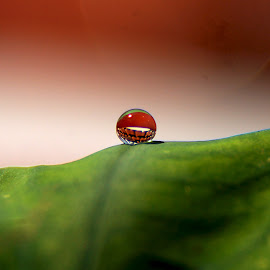 dew by Budi Setiawan - Nature Up Close Water ( water, water drops, macro, macro photography, dew, nature close up,  )