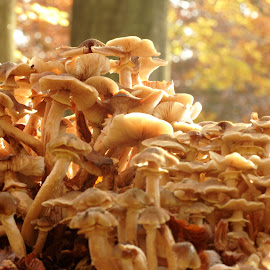 by Michael de Schacht - Nature Up Close Mushrooms & Fungi