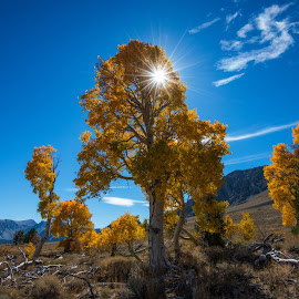 The Aspens of Parker Bench 3 by Mark Cote - Landscapes Mountains & Hills ( june lake loop, quaking aspen, silver lake, parker bench, sierra nevada mountains, fall, color, colorful, nature,  )