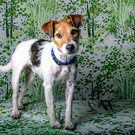 Won't you Adopt me?  by Janice Carabine - Animals - Dogs Puppies ( jack, jack russell terrier, dog  cuteness )