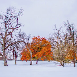 Fort Sill by Jason Holden - City,  Street & Park  City Parks ( foliage, colors, fall, snow )