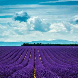 Provence lavender fields by Srečko Prša - Landscapes Prairies, Meadows & Fields ( field, provence, clouds, sky, field flower, travel, lavender )