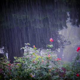 And then it started raining in Portland, Oregon. Go figure! by Liz Hahn - Landscapes Weather
