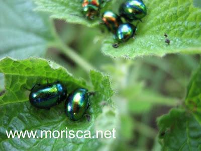 green-bug01