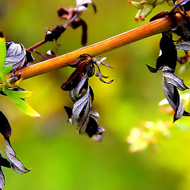 by Eni Zanic - Nature Up Close Leaves & Grasses
