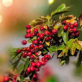Culorile toamnei - Autumn Colors by Constantinescu Adrian Radu - Nature Up Close Other plants