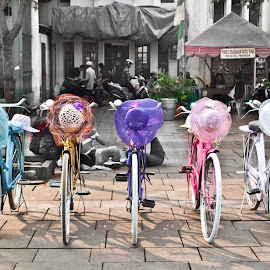 Ladies Bicycles by Tais Gilo - Transportation Bicycles (  )