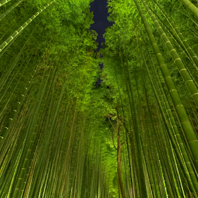 Night bamboo  by Ryusuke Komori - Landscapes Forests ( bamboo, japan, night view, kyoto, forest )