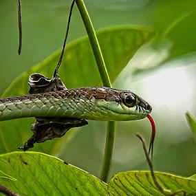 by John Wyne James - Animals Reptiles