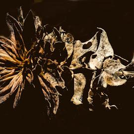 Skeletal Flower by Stan Lupo - Digital Art Things ( macro, macrophotography, nature, nature through my eyes, nature up-close, nature photography,  )