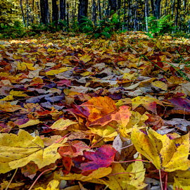 Fall Blanket by Marilyn Magnuson - Nature Up Close Leaves & Grasses ( hiking trail, colored leaves on forest floor, leaves close-up, fall, forest, colored leaves )