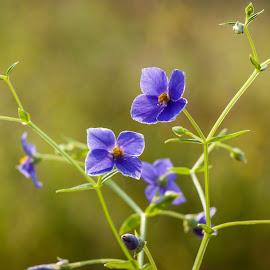 by Sanjay Nagaonkar - Nature Up Close Other plants