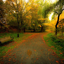 A Seat on a Path by Gordon Follett - City,  Street & Park  City Parks ( walking path, peaceful, newfoundland, park, bench, autumn, seat, serene, trail, path, city park, walk, , nature, landscape )