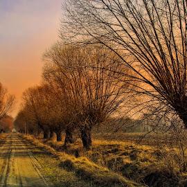 road by Tomasz Marciniak - Landscapes Prairies, Meadows & Fields