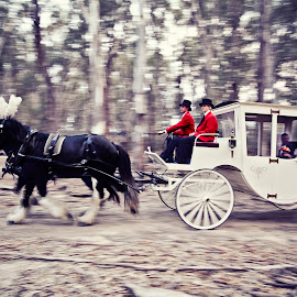 Horse & Carriage by Alan Evans - Wedding Other ( wedding photography, horses, carriage, horse, horse and carriage, aj photography, red jackets, echuca wedding photographer, moama, wedding, wedding day, echuca, bride and groom, bride, groom,  )