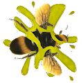 Download Bee Smasher APK