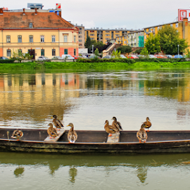 Don't rock my boat by Oliver Švob - Transportation Boats ( canon, water, europe, karlovac, kupa, croatia, ducks, duck, river boat, boat, wooden boat, river )