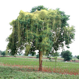 beautiful nature  by Tamilarasan Jayatamilarasan - Nature Up Close Trees & Bushes