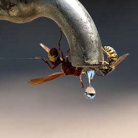 ... by Hale Yeşiloğlu - Animals Insects & Spiders ( bees, water drops, wasp, droplet, bee, drop )