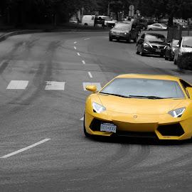 Love the Lamborghini yellow by David Kimber - Transportation Automobiles