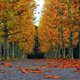 Autumn Color by Leka Huie - City,  Street & Park  City Parks ( japan, autumn, tokyo, leaves, , Chair, Chairs, Sitting )