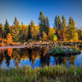 City Park of Elk Island  by Joseph Law - City,  Street & Park  City Parks ( blue sky, bushes, trees, reflections, elk island, city park, pond, fall color )