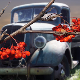 The old Truck behind the Bush by Joerg Schlagheck - Digital Art Things ( summer nice., old, truck, bush, ford, berries,  )